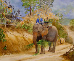 Thailand Elephant Rider - painting by Helen Carson